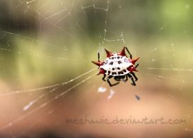 Red Horned Spider by mechanic