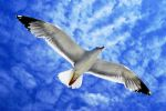 Seagull in The Sky by CitizenFresh