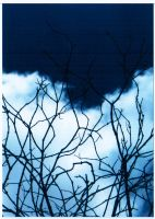 Branches to the Sky by PhillipSupertramp