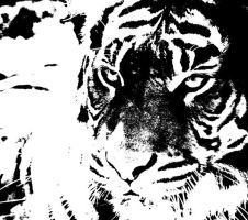 Tiger B and W by Lady-Puma