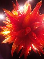 Chihuly Exposition_Musee Beaux-Arts Montreal_17 by SabArtFan