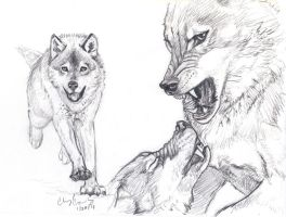 Wolf Fight sketch by silvercrossfox