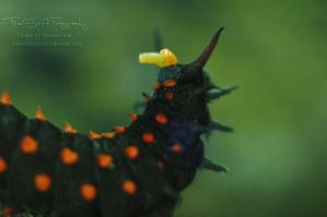 Who Goes There by FreeSpiritFotography