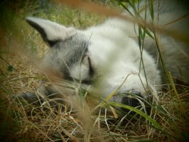 Sleeping Wolfling II by NightNike