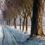 Frost in the Po Valley by MarioDellagiovanna