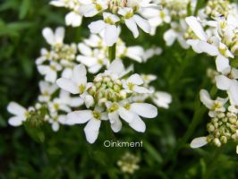 Miniature Gardens- White2 by Oinkment