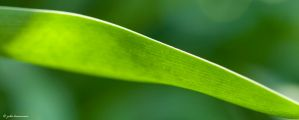 Simply Green 2 by juliekoesmarno