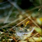 the web by MarcoHeisler