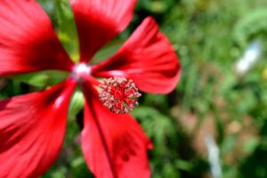 This Past Spring: Red4 by MrsChibi