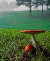 mushrooms and mist by heartyfisher