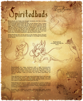 Spiritedbuds Reference Sheet by LadyMartina