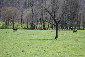 Pasture by The-Feral-Child