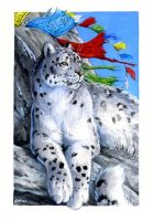 Snow Leopard : Wild Cat Deck by Hbruton
