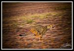 Cheetah at speed by Kingofspades85