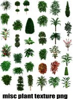 misc plant tree texture png by dbszabo1