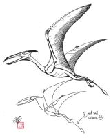 Draw a Pterosaur by Diana-Huang