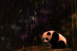 Panda -- Trade by Sommer-Studios