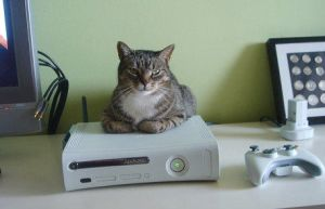 Cat and Xbox 360 :) by tkasabov2