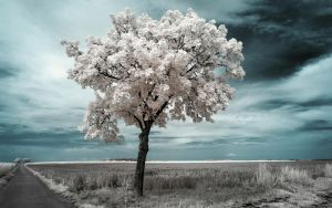 White Trees Part VI by myINQI