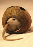 Mr. Coconut by SKSfoto