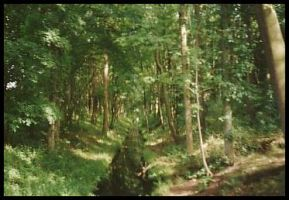 .:I LOVE FORESTS:. by JollyM