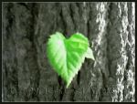 The roots of heart ... by KiArA83