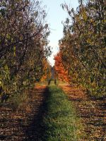 Orchard in Fall by BlutEisen