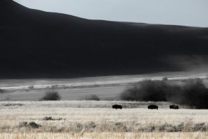 Buffalo On the Range by Way2spoiled
