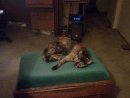 Brynna Takes Over The Ottoman 1 by wordboy