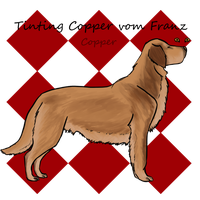 Tinting Copper vom Franz - Sold by Target-Kennel