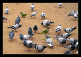 Parrots and Pigeons by clelba