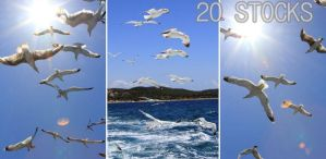Seagulls Stock PACK by Malleni-Stock