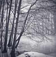 Forest's Winter by Ecnest
