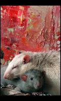 Rat love I by SecretNocturne