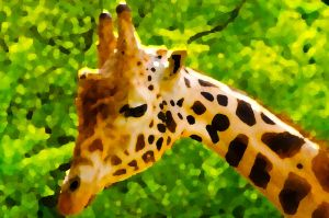 Giraffe by DPCloud01