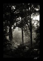 The Trees by InLightImagery