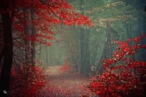 Geisha Path by ildiko-neer