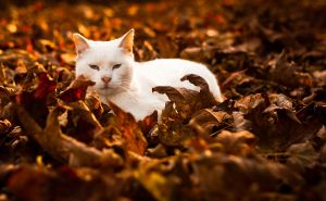 Warm Autumn by MattRiggPhotography