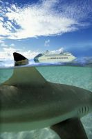 shark cruise by Ironmaster99
