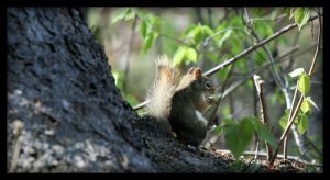 cropped squirrel by NOS2002