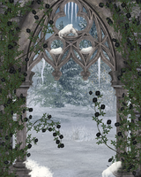 Black Rose Winter Window by ED-resources