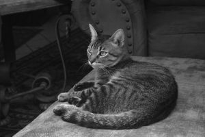 Meow Cat. by oppen