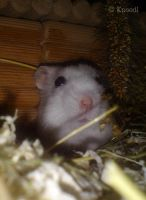 Hamsters Nose by I-Knoedl
