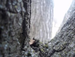 A Tree's Perspective 7 by invaderjanie