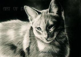 my cat in charcoal by Drehli