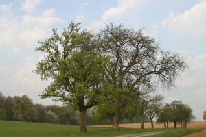 trees in Spring3 by archaeopteryx-stocks