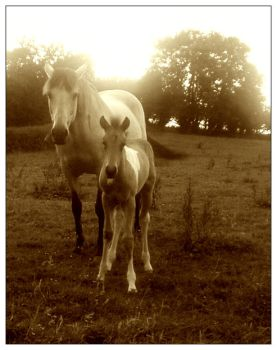 Mare and Foal - B+W by RiniMac