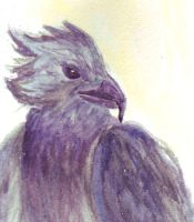 Harpy Eagle by fire-camel