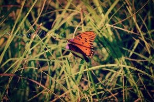 Imma Beautiful Butterfly by PhotographicCrypto