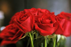 Red Lensbaby Bouquet I by LDFranklin
